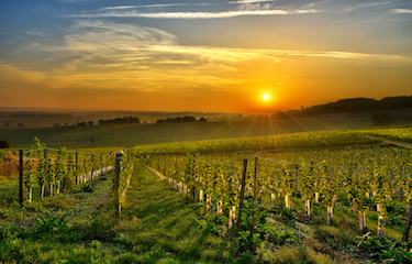 Vineyards in the Dordogne, Aquitaine